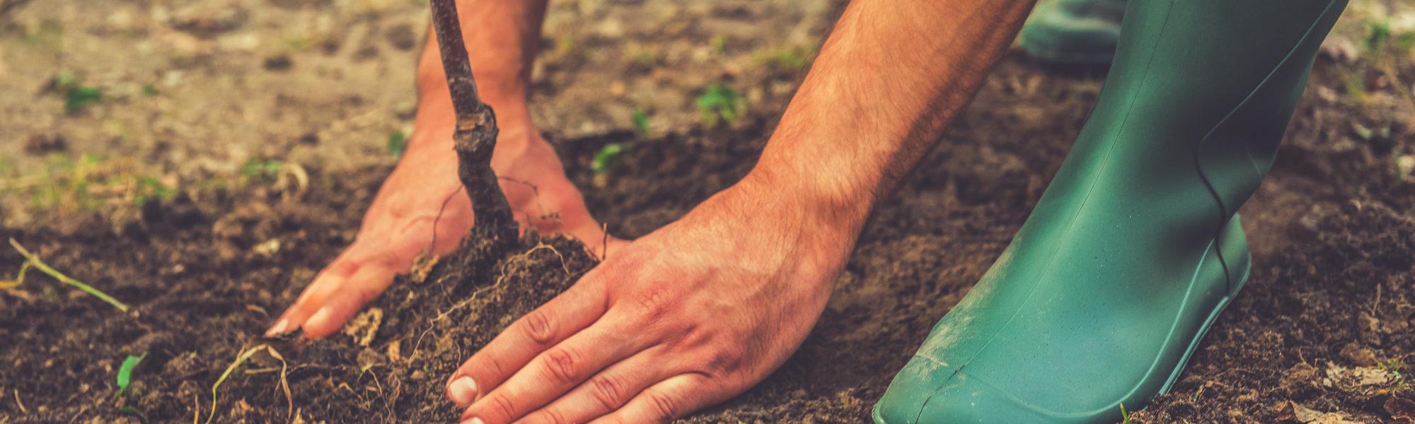 banner-tree-planting