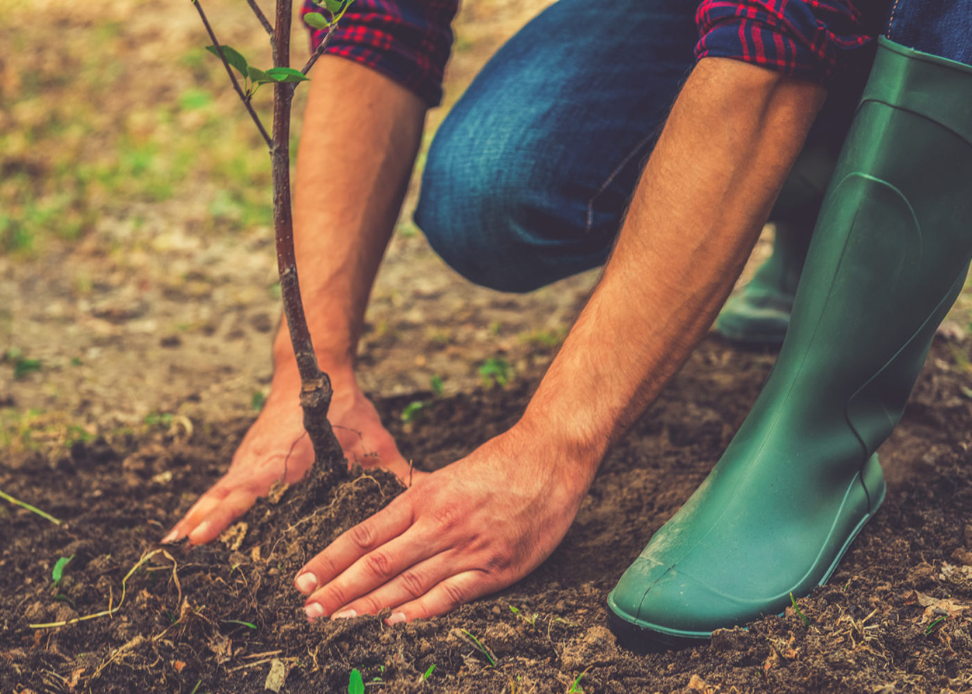 block-tree-planting